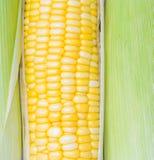 maïs d'épis frais Image stock