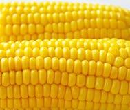 Maïs d'or Photographie stock