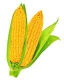 maïs d'isolement photo libre de droits