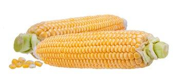 Maïs d'isolement sur le blanc Image libre de droits