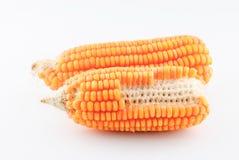 Maïs d'isolement sur le blanc Image stock