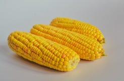Maïs d'isolement sur le fond blanc Photographie stock
