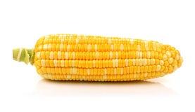 Maïs d'isolement sur un fond blanc Image stock