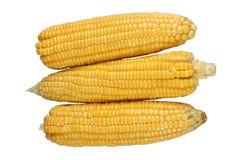 Maïs d'isolement sur un fond blanc Photos stock