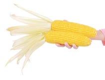 Maïs d'isolement sur un fond blanc Photographie stock