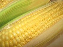 Maïs dans l'épi Photographie stock libre de droits