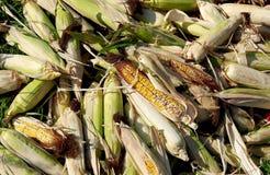 Maïs dans la cosse photos libres de droits