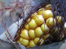 Maïs dans la cosse directement de la tige Photographie stock