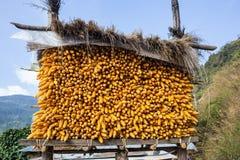Maïs dans le stockage Photo stock