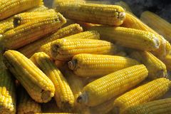 Maïs de ébullition sur le marché Photos stock