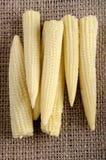 Maïs de bébé sur le jute Photo stock