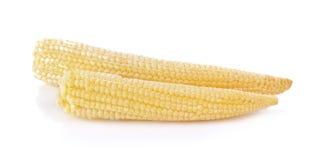 Maïs de chéri sur un fond blanc Images libres de droits