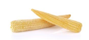 Maïs de chéri sur un fond blanc Image stock