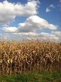 Maïs de chute Photographie stock