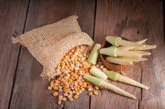 Maïs de graine et maïs de bébé sur le fond en bois de table Images stock