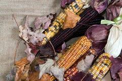 Maïs de maïs plein Images stock