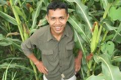 Maïs de réussite cultivant le propriétaire Photo stock