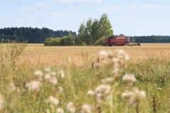 Maïs de recolte mécanique de cartel sur le champ Images stock