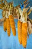 Maïs de séchage Photos stock