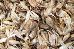 Maïs de Shell photo stock