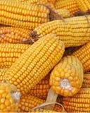 Maïs de zone Photographie stock