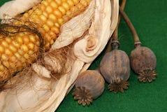 Maïs en papaver Stock Foto's
