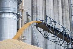 Maïs en surplus empilé au sol Photos stock