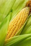 Maïs et épi Photos libres de droits