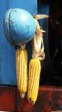 Maïs et fer Photographie stock libre de droits