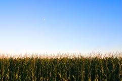 Maïs et la lune Photographie stock
