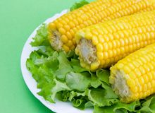 Maïs et laitue Photos stock