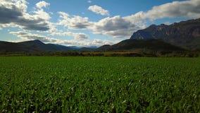 Maïs et montagnes banque de vidéos