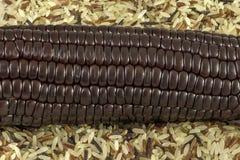 Maïs et riz noirs Photos libres de droits