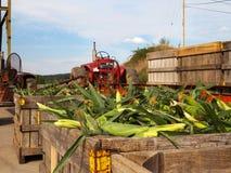 Maïs et tracteurs de ferme Photographie stock
