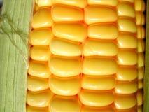 Maïs frais Image libre de droits