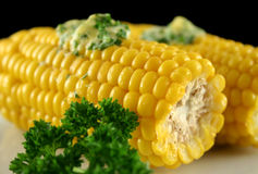 Maïs frais 4 image stock