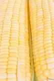 Maïs frais cru Photographie stock