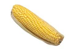 Maïs frais d'isolement sur le blanc Image libre de droits