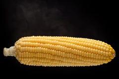 Maïs frais d'isolement sur le fond noir Images stock