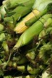 Maïs frais de l'Iowa Images libres de droits