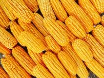 Maïs frais et jaune pour le traitement des denrées alimentaires des produits alimentaires photo stock