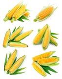 Maïs frais figé avec la récolte verte de feuille photographie stock