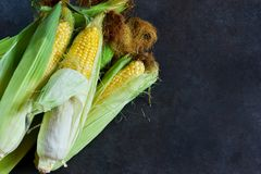 Maïs frais, juteux, cru sur un fond noir photographie stock libre de droits