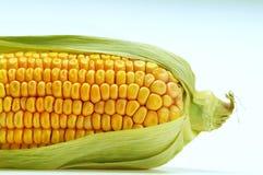 Maïs frais sur le bleu Photographie stock libre de droits