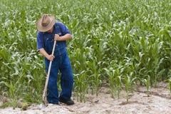 Maïs grandissant de fermier Photo libre de droits
