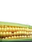 Maïs - haut proche Photographie stock