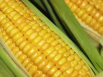 Maïs het graan in Macro Stock Afbeelding