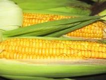 Maïs het graan in Macro Stock Foto's