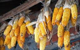 Maïs jaune photo libre de droits