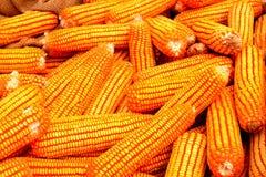 Maïs jaune Photographie stock